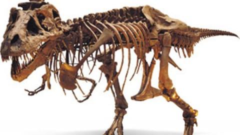 Sundance Snap : Dinosaur 13 Raises Brows