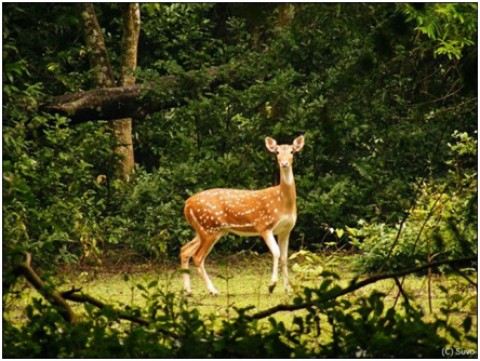 BETHUADAHARI- THE TRYST WITH WILDERNESS