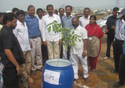 Gangavaram Port plants sapling