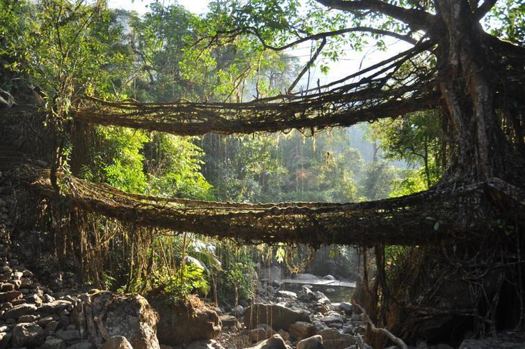 Double_decker-root-bridge