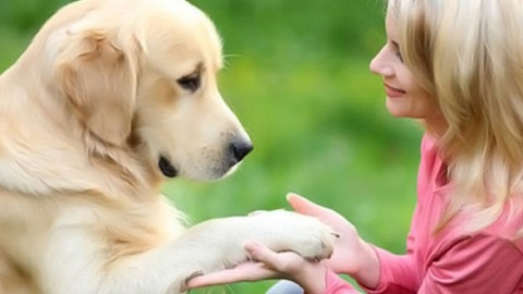 Six ways in which our pets improve our health