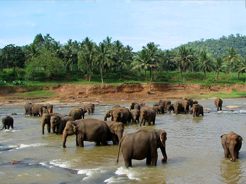 Belghar Wildlife Sanctuary Orissa